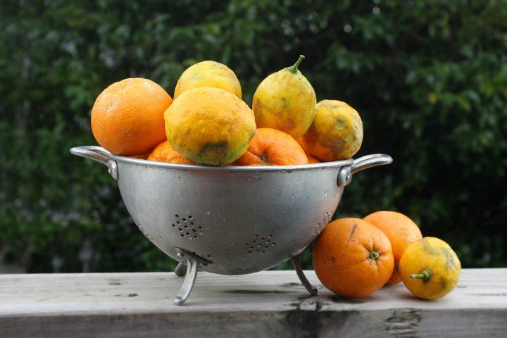 Perch sui limoni si forma la muffa cucina serafina - Perche si forma la muffa in casa ...