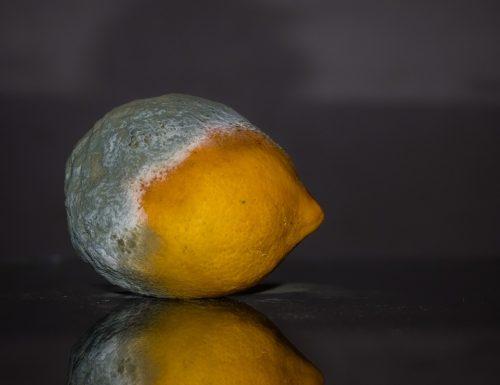Perché sui limoni si forma la muffa