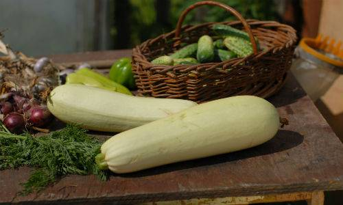 ricette con zucchine-passioneincucina.giallozafferano.it