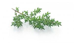 TOP-timo-foglie