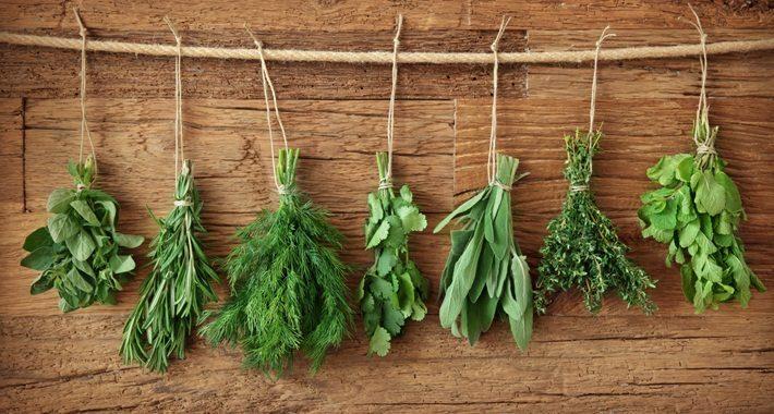 Guida alle erbe aromatiche
