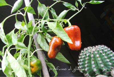 in simbiosi con le piante grasse