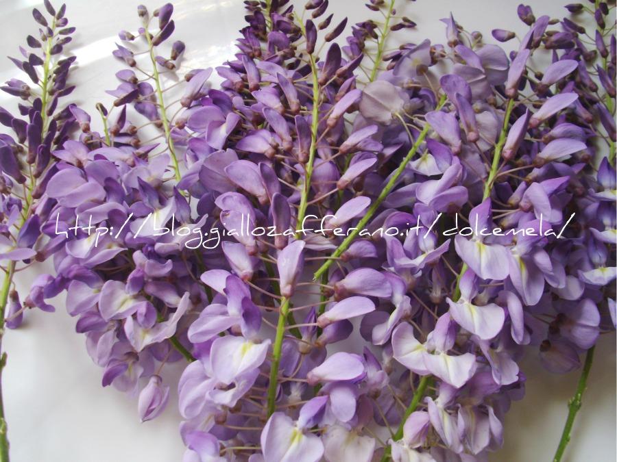 fiori di glicine in tempura