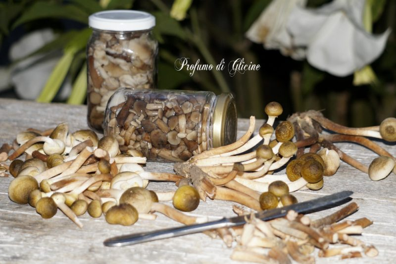Come conservare funghi chiodini al naturale