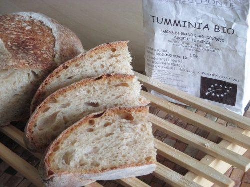 Pane con 40% Tumminia e lievito madre