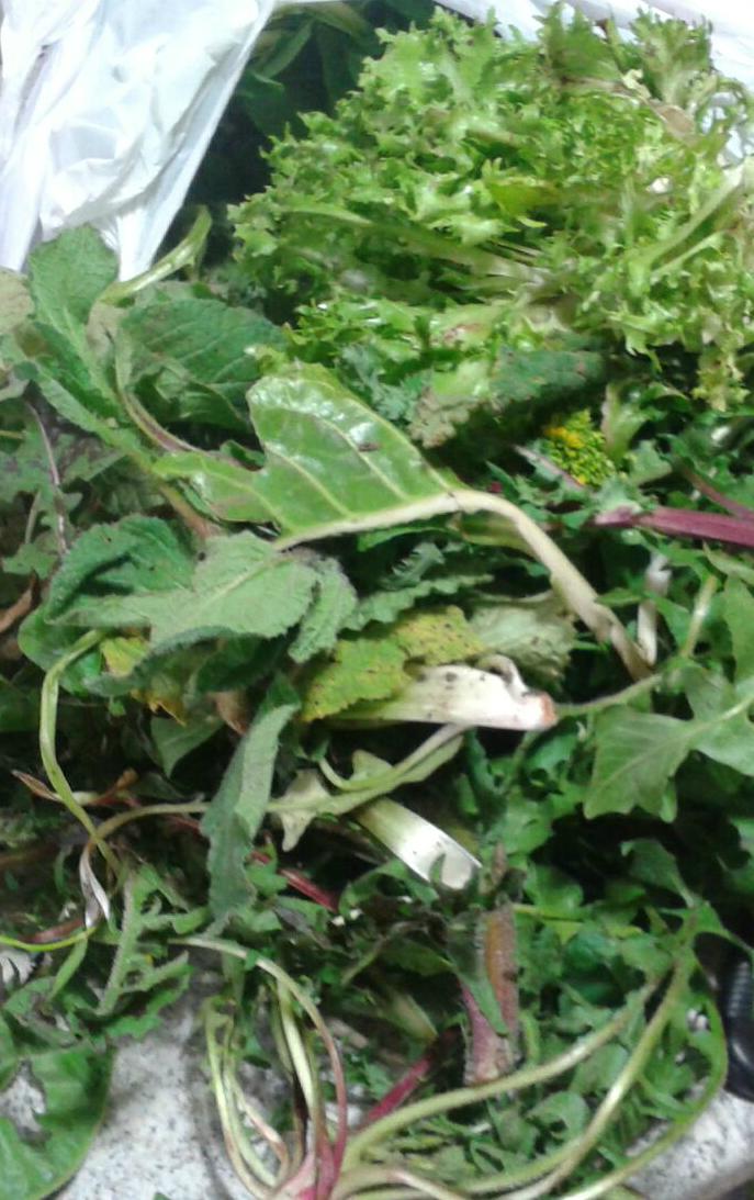 sacchetto di erbe