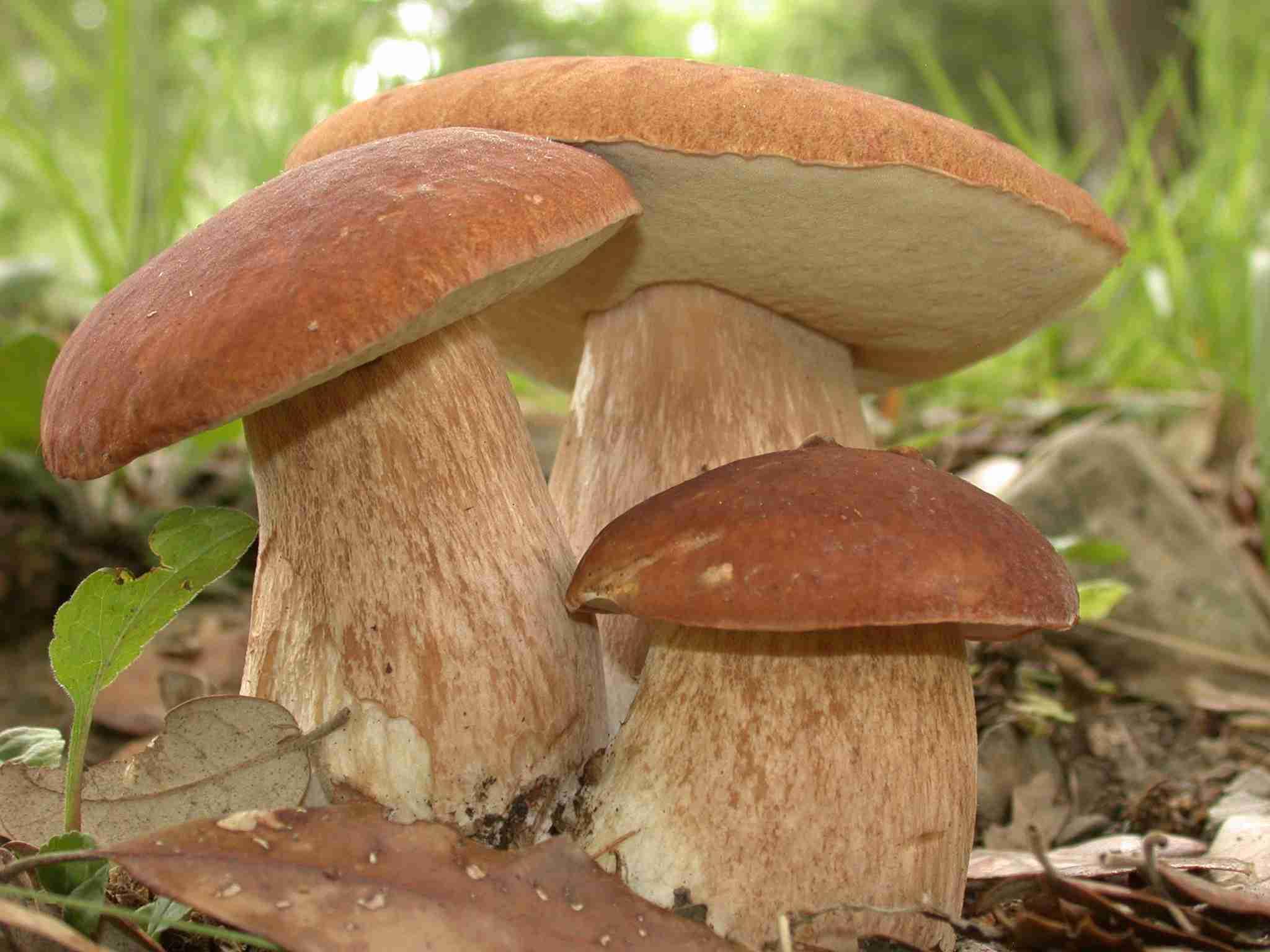 Зилаир грибы башкирии фото и название 2