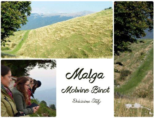 La Malga Molvine Binot, una passeggiata in mezzo alla natura