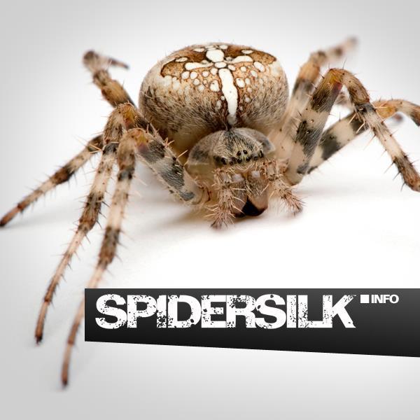spidersilk.info