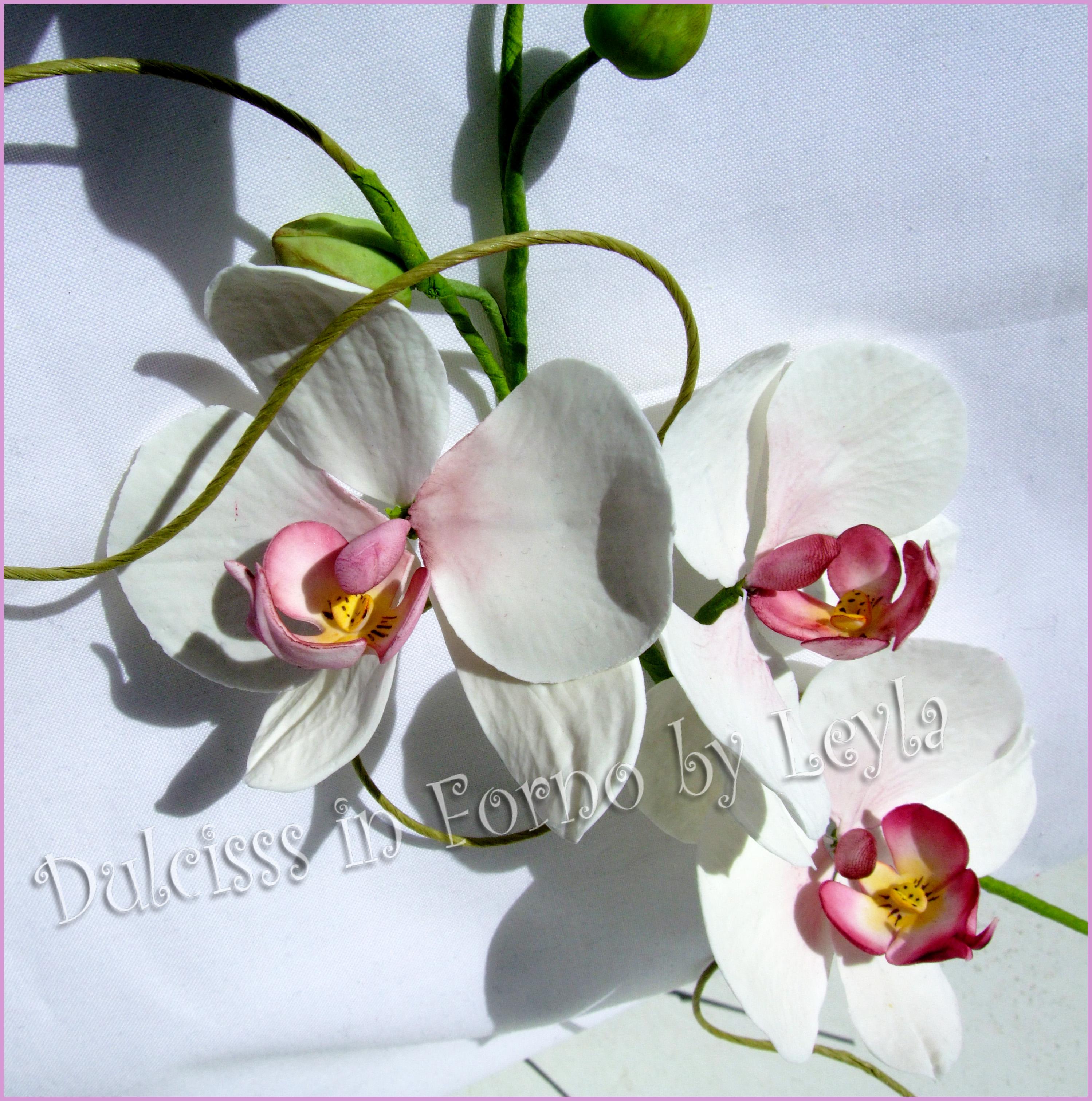 Ramo di orchidea e farfalla in gumpaste corso con ida for Nuovo stelo orchidea