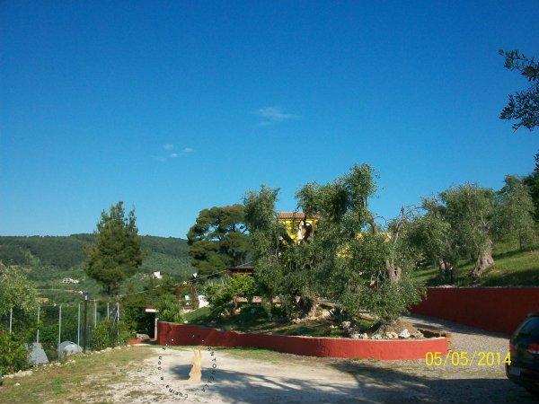 Borgo del Nespolo_gli ulivi