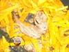 penne acciughe e arancia ricetta raffinata fata antonella
