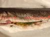 ombrina boccadoro al sale ricetta con forno fataantonella