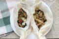 Funghi e cipolline borettane al cartoccio