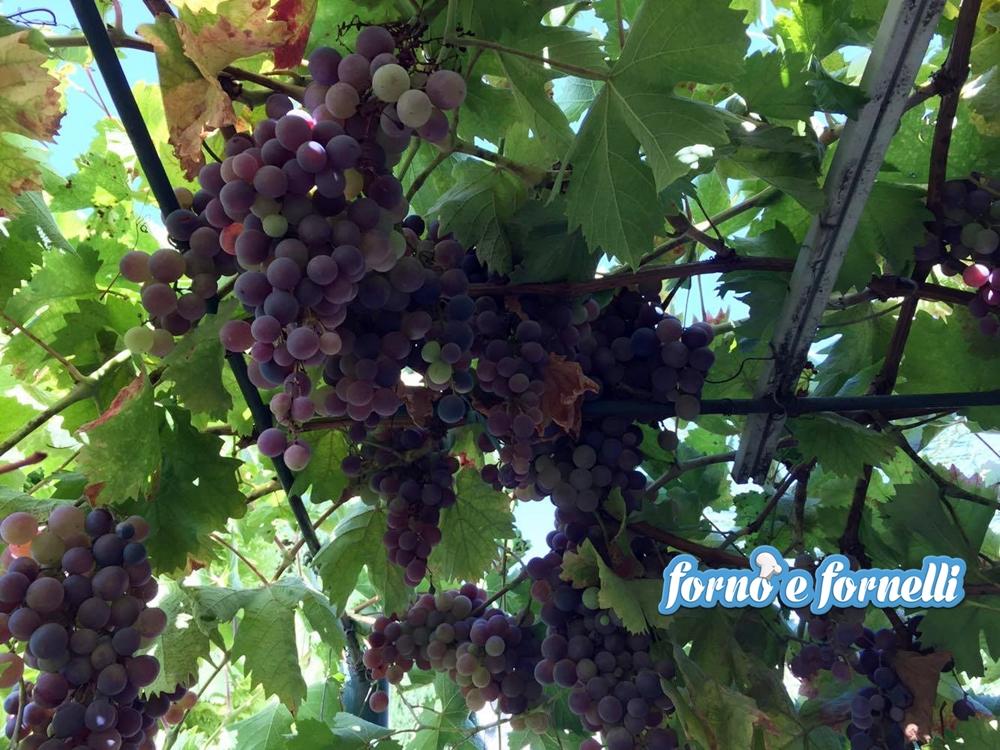 Settembre frutta e verdura del mese