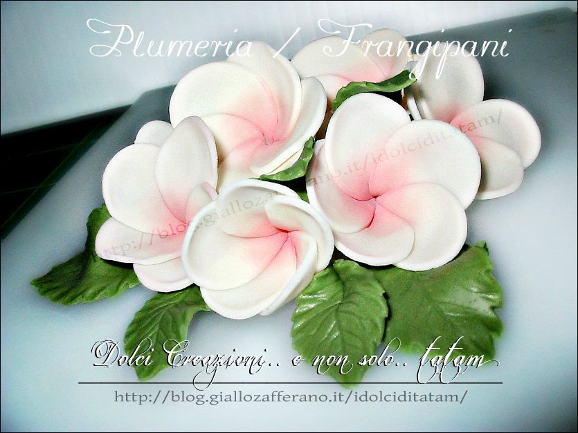 Fiori Frangipani o Plumeria in pasta di zucchero
