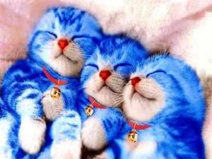 gattini doreamon