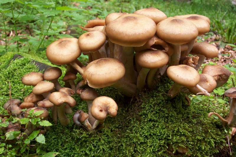 Interno significa da un fungo di gambe