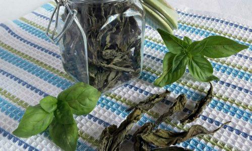 Basilico essiccato per l'inverno