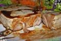 Trancio di  tonno fresco in padella