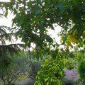 Vista dal terrazzo - ritorno in Friuli
