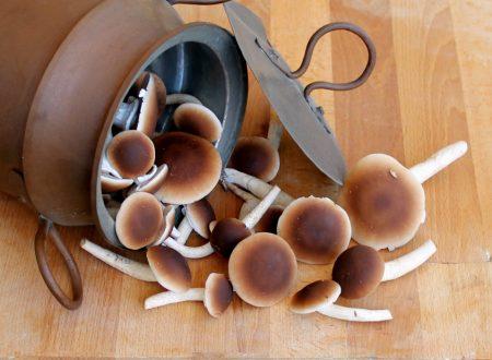 Come cuocere i funghi Pioppini