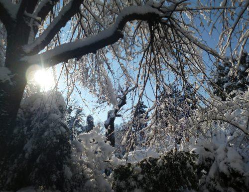 inverno bianco – il colore del cavolfiore