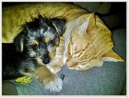 Muffin e Oliver