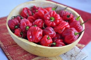 crema al peperoncino habanero | ricetta la cucina di rosalba