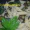 Pennettine con zucchine al profumo di basilico