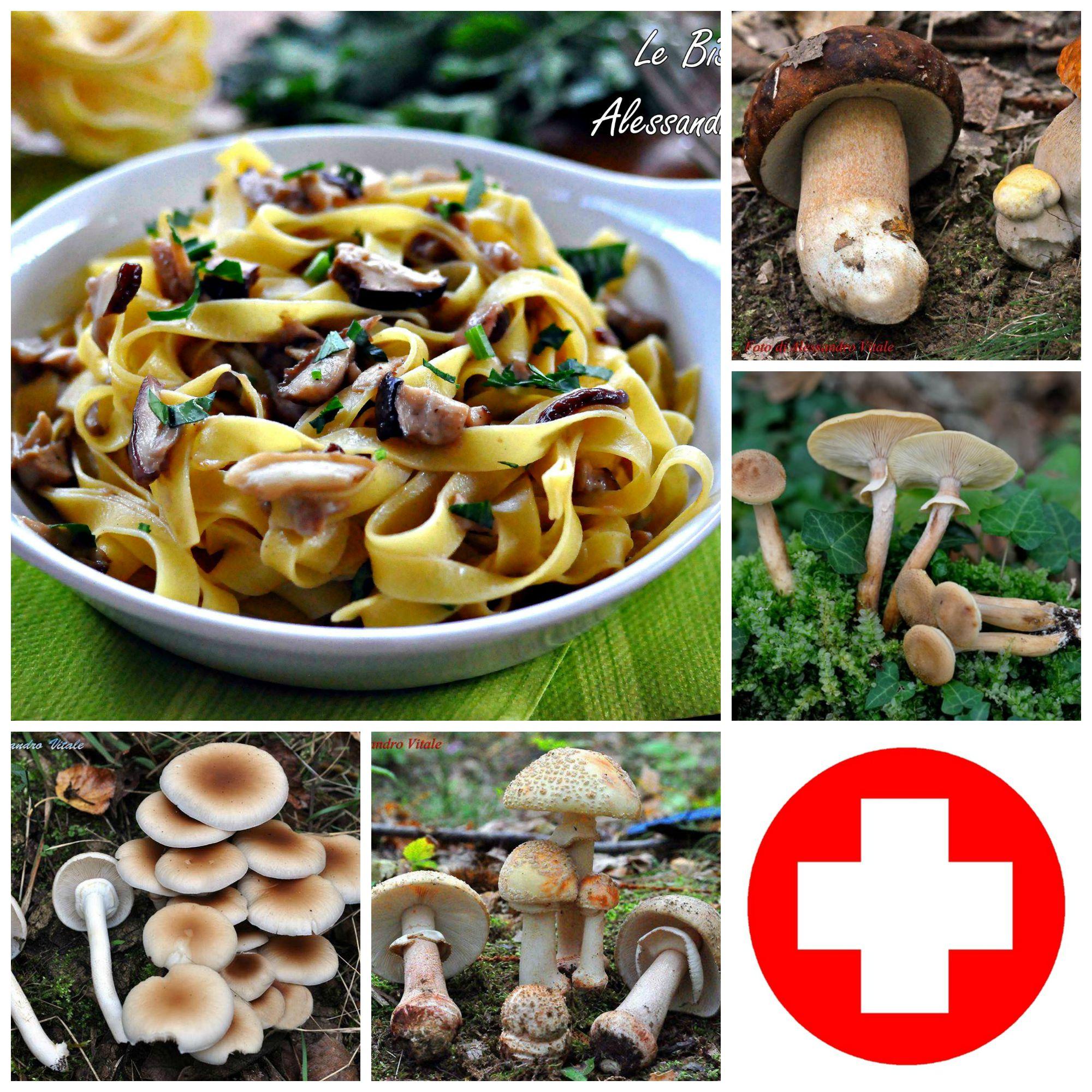 Raccogliere cucinare e conservare i funghi consigli del for Cucinare funghi