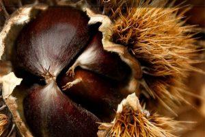 Castagna – Dal bosco alla cucina