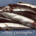 alici ( acciughe f)oto blog