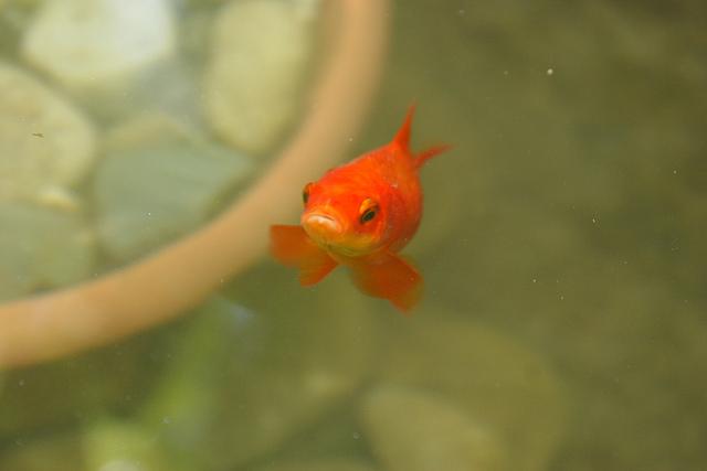 Pesci ricette di cotto e postato for Filtro vasca pesci