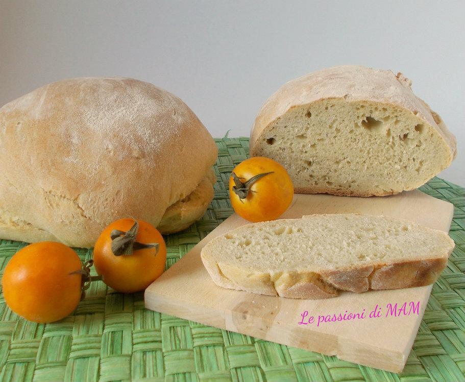 pane puccia con lievito madre