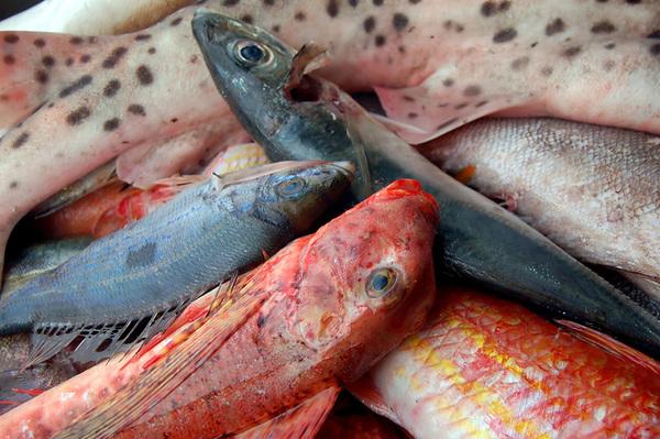 Pesci e cotture le ricette del cuore for Cucinare murena