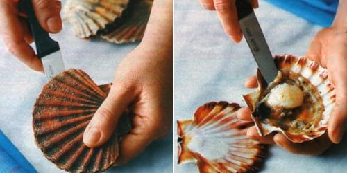 Come aprire e cuocere le capesante2
