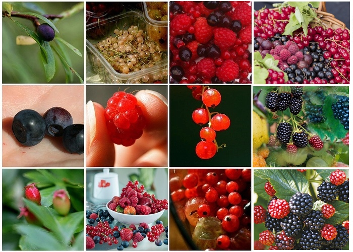 Eliminare la Cellulite con frutti di bosco spezie e pesce1