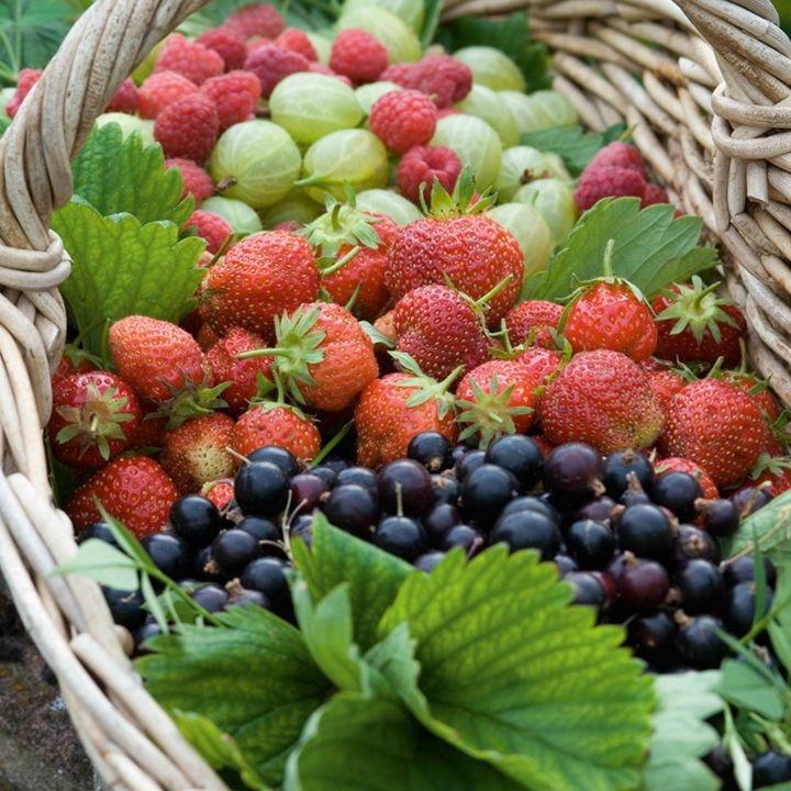 Eliminare la Cellulite con frutti di bosco spezie e pesce3