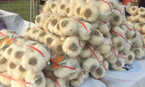 L'aglio di Voghiera dop