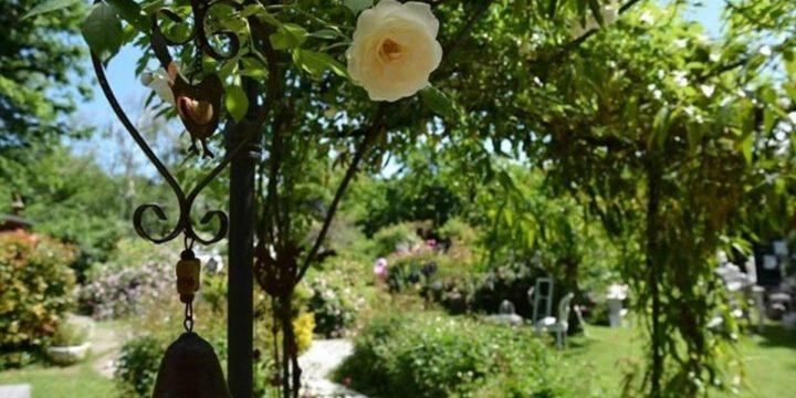 il-mondo-dei-fiori