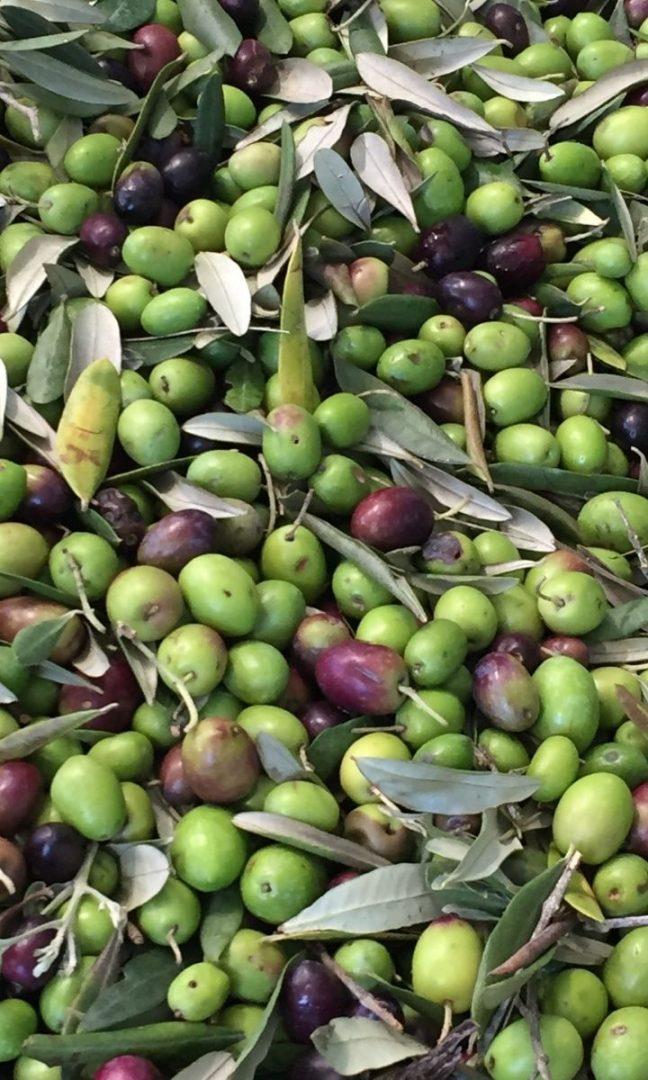 prime-olive