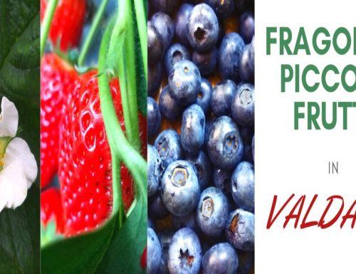 La filiera fragole e piccoli frutti nella Valdaso