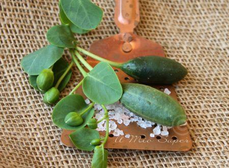 Conservare i CUCUNCI frutti del cappero sotto sale e aceto