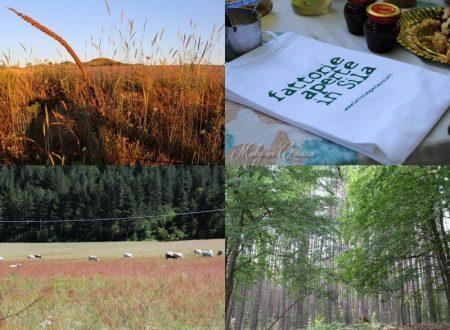 Blog tour Sila tra natura, tradizioni e gastronomia