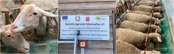 Un-blogtour-alla-scoperta-del-Pecorino-Toscano-DOP-2
