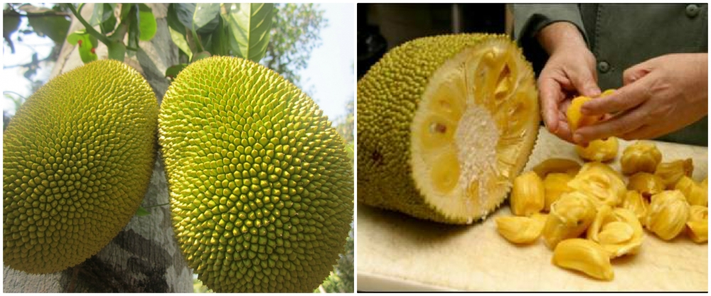 jack fruit - giaco
