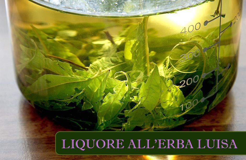 liquore erba luisa