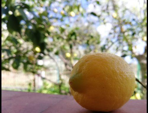Benefici del limone – come aiutano il nostro corpo i limoni