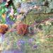 Ricetta della saggezza, Storia di due fiorellini nel parco, saggezza, fiorellini